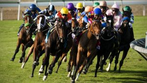 Horse Betting Systems - How to Pick a Winner